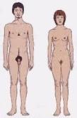 Différences physiologiques femme - homme